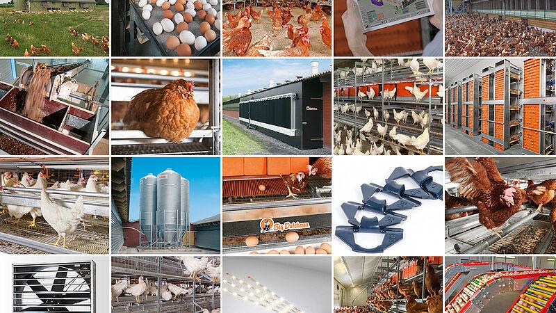 现代化禽蛋生产