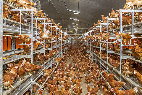 NATURA Step aviary system (barn, free-range and organic egg production)